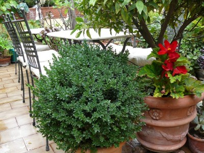 La Terrazza dei Pelargoni B&B - Ventimiglia